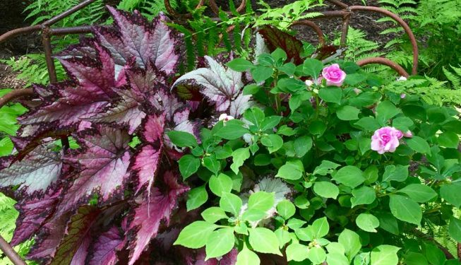 Annual Plantings