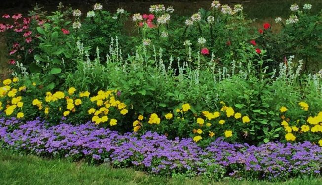 A Variety of Annual Planting add Colorful interest